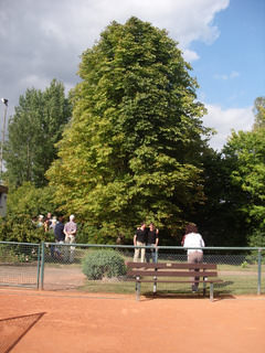 Tennis - VfR Weddel - 2012 - Täubner5